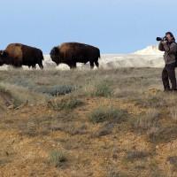 El fotógrafo Andoni Canela en Estados Unidos fotografiando bisontes americanos.