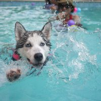 Remojón en la piscina. Foto: Pixabay.