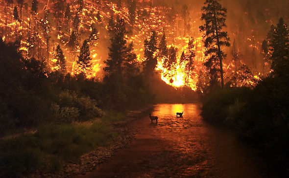 Un incendio forestal. Foto: Creative Commons.