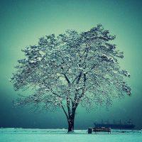 Un árbol nevado. Foto: Flickr Creative Commons.
